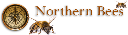 Northern Bees