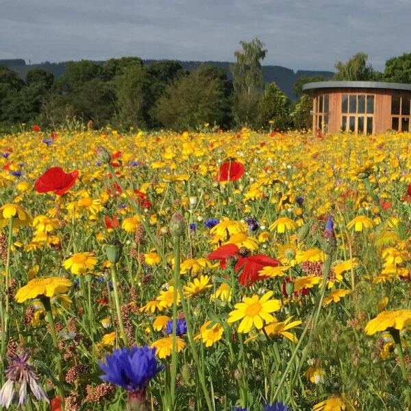 100% Wildflower Seed Mixtures